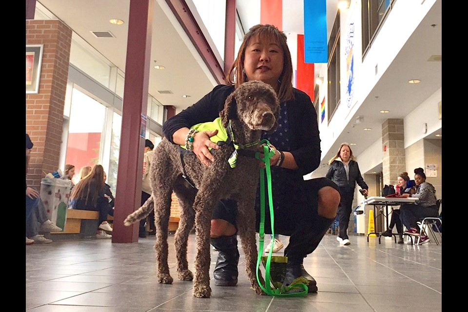 Labradoodle Tracker is Innisdale's Newest Staff Member- Barrie Today
