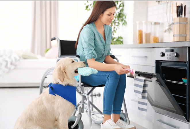 A Canadian Service Dog Industry and Market Place Study